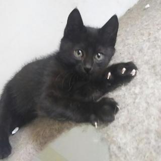 黒猫の女の子 生後3ヶ月