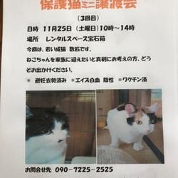 11/25本八幡駅前、猫譲渡会開催