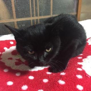 子猫★黒猫ちゃん★プーちゃん