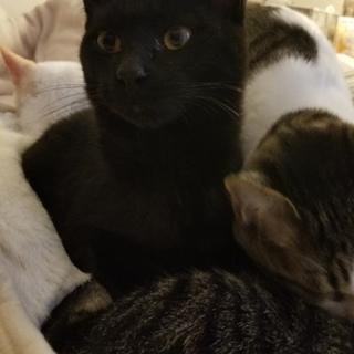 人懐っこい黒猫です♪