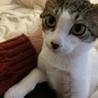 人懐っこい子猫です♪