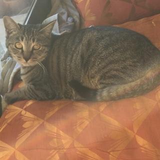 7ヶ月くらいのメス猫、やんちゃで人見知りです!