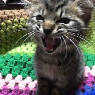 甘えん坊な子猫!