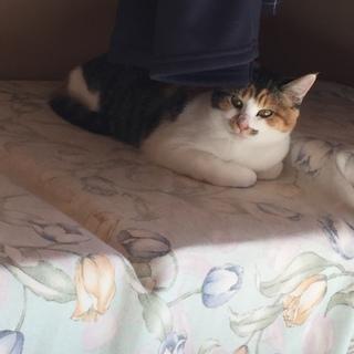 6ヶ月くらいのやんちゃなメス猫ちゃんです!