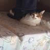 6ヶ月くらいのやんちゃな三毛のメス猫ちゃんです!