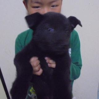 生後2ケ月の子犬ちゃんです