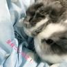 うさぎの赤ちゃん サムネイル2