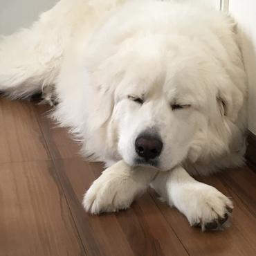 スヤスヤ寝てます