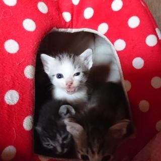 5匹☆子猫