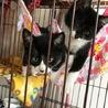 白黒仔猫 おっとり癒し系女の子 アユミ サムネイル7