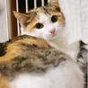 保護猫・コント255号!紅一点☆ナンシーちゃん