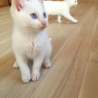 綺麗なブルーの瞳の男の子です!