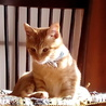 ネコさんに首輪