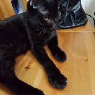 8ヶ月くらいのイケメンの黒猫