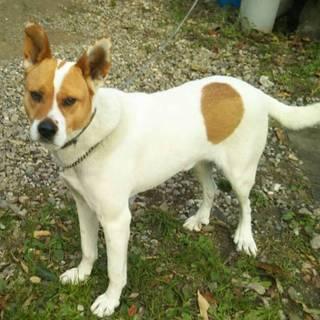 行き場を失った優しいMIX犬を助けてください!