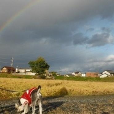 お散歩してたら虹が出てきた