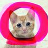 2ヶ月♡ラオ茶トラ茶白メス甘えん坊抱っこ猫