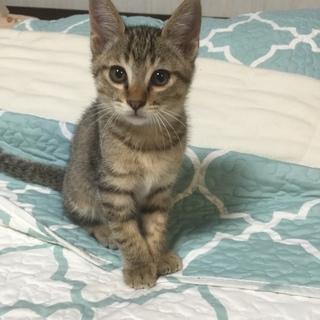 可愛い盛りの2ヶ月のオス猫ちゃん