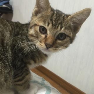 可愛い盛り 2か月のオス猫ちゃん