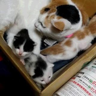 生後一週間の子猫ちゃん3匹