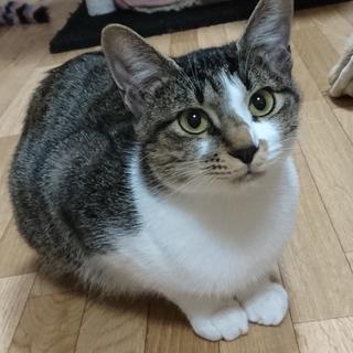 家猫修行中のミタビちゃん