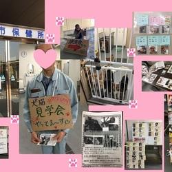 岡山県倉敷保健所譲渡会レポート2017.11/23