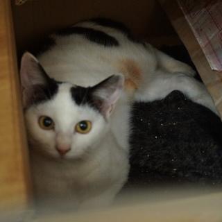 ザ・日本猫はんちゃん、2匹姉妹