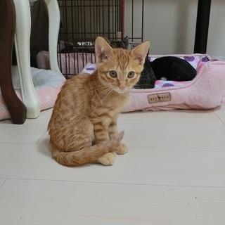 十五夜 生後4か月 猫の方舟里親会に参加をします。