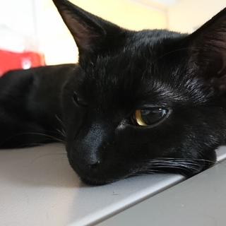 生後7ヶ月黒猫の黒君