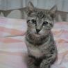 4ヶ月位 可愛いキジ コロネちゃん サムネイル3
