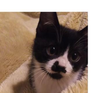 処分器の前に置かれていた子猫 2ヶ月