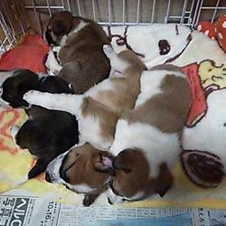 世界遺産の近くで生まれた子犬4姉妹です・・