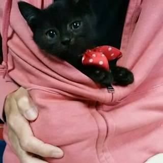 トライアル決定☆まん丸お目目の黒猫くん♂3ヶ月☆