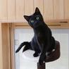 生後8ヶ月、お腹の白い黒猫ちゃん