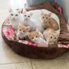 Cats'チャリティー播磨@Chemmy家
