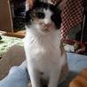 再募集です。甘えたの三毛猫ちゃん サムネイル2