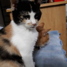 再募集です。甘えたの三毛猫ちゃん サムネイル3