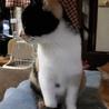 再募集です。甘えたの三毛猫ちゃん サムネイル4