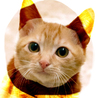3ヶ月♡ラオ茶トラ茶白メス甘えん坊抱っこ猫