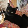 2ケ月半☆甘えん坊な黒猫のサムくん