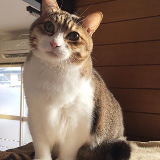 甘えんぼおっとりモフモフ癒し猫