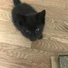 茨城の多頭飼いから保護した可愛い黒子猫