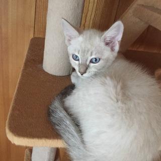 青い目が綺麗な、ブルー