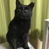 人間大好き!!超甘えん坊 黒猫アサちゃん 2歳 サムネイル2