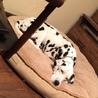老犬エマちゃん穏やかに過ごしてくださるご家族募集 サムネイル2