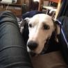 老犬エマちゃん穏やかに過ごしてくださるご家族募集 サムネイル4