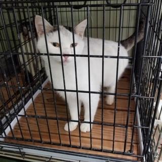 動画あり 時間がありませんスリスリ可愛い白猫ちゃん