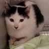 動画あり 緊急‼ 時間がありません 可愛い子猫