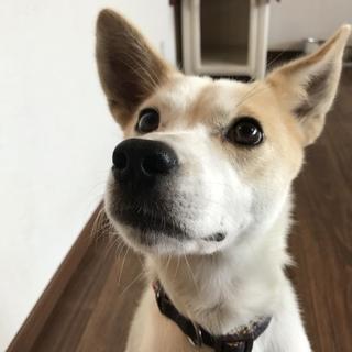 利口なMIX犬 推定1歳半