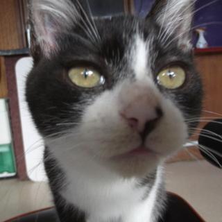 【宮城県仙台市】子猫里親募集です!!